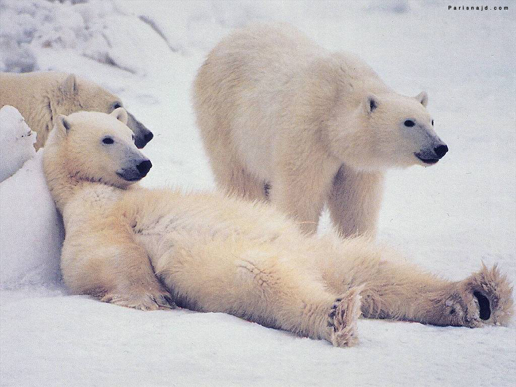���� ����� ours_relax.jpg