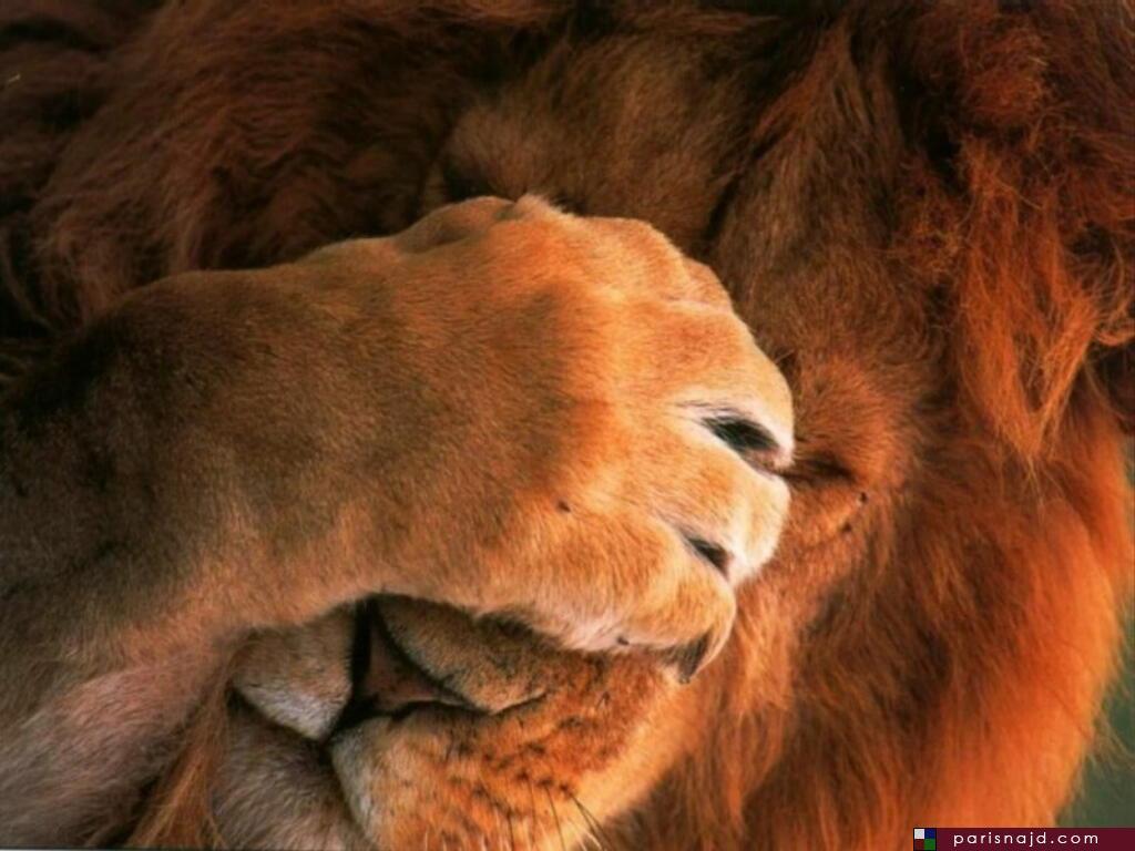 صور مضحكة للحيوانات ، صور حيوانات مضحكة parisnajd_20061028_2