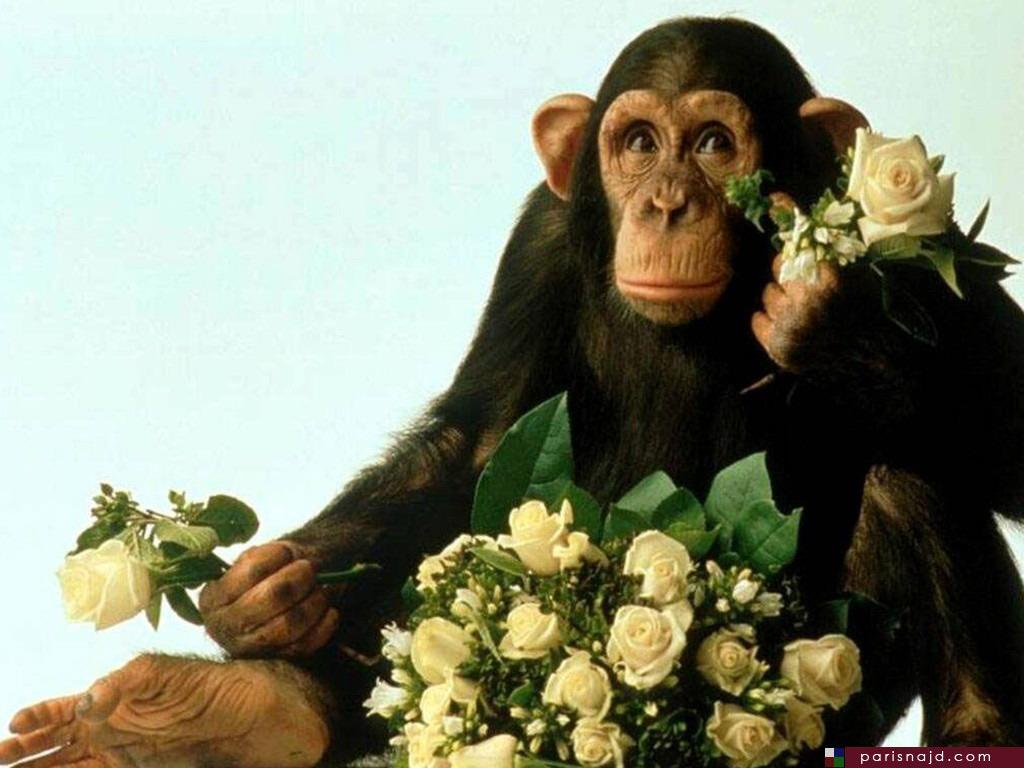 صور مضحكة للحيوانات ، صور حيوانات مضحكة parisnajd_20061028_3