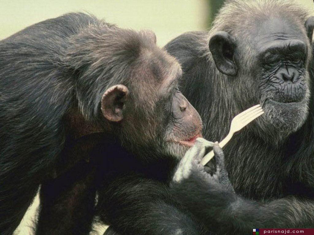 صور مضحكة للحيوانات ، صور حيوانات مضحكة parisnajd_20061028_9