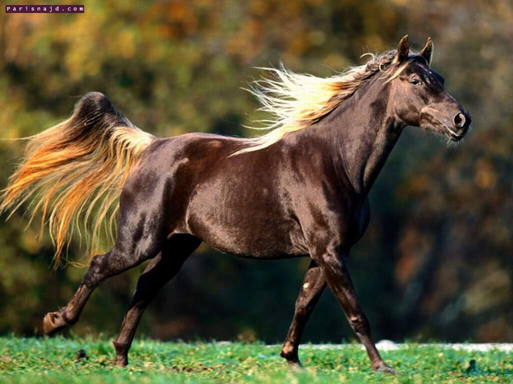 صور خيول 030105