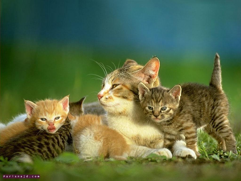 تشكيلة من الحيوانات