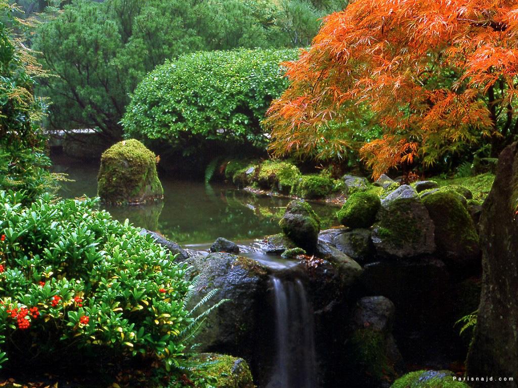 صور من الطبيعة... .تجنن Moss-Falls.jpg