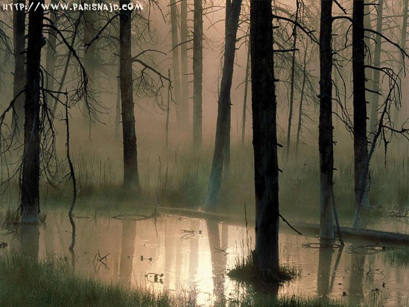 ..!! rain-with-tree.jpg