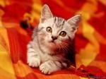 ������ ���� �������� ����� �������... cat_c3.jpg