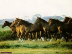 ������ ���� �������� ����� �������... horse_wallpaper_003_1024.jpg