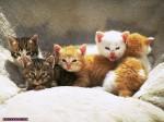 حيوانات أليفة