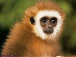 ������ ���� �������� ����� �������... monkey_004.jpg
