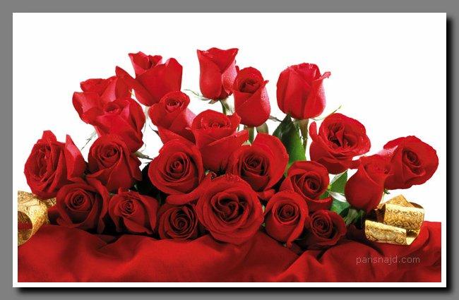 عندما تتبعثر الورود